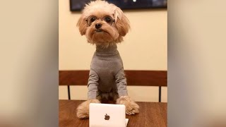 EXTREMELY SMART DOGS - You won't believe your eyes!