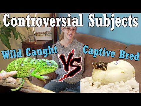 Con-Sub: Wild Caught vs Captive Bred Reptiles
