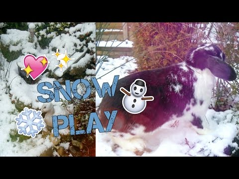 ROSIE'S SNOW PLAY: Free Ranging & Binkies! | RosieBunneh