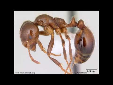 Bug Bites- Why do ants love electronics?