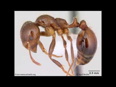 Bug Bites- Why do ants love electronics?