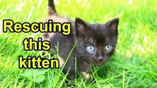 Kitten living on an old cushion in a barn enters foster care