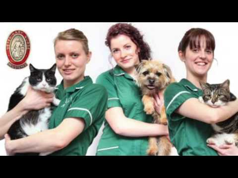 Veterinary Nurses Mobility In Greece