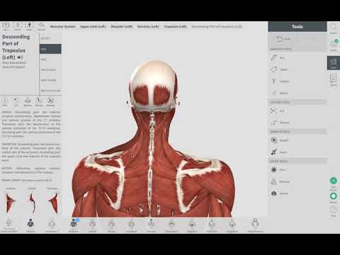 Neck Pain Muscle Knot | Orthopedic and Balance Therapy Specialists | 219.548.8770