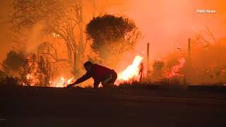 Man risks life to save wild rabbit during SoCal wildfire   ABC7
