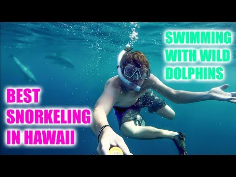 SWIM WITH DOLPHINS IN HAWAII // BEST SNORKELING ON BIG ISLAND