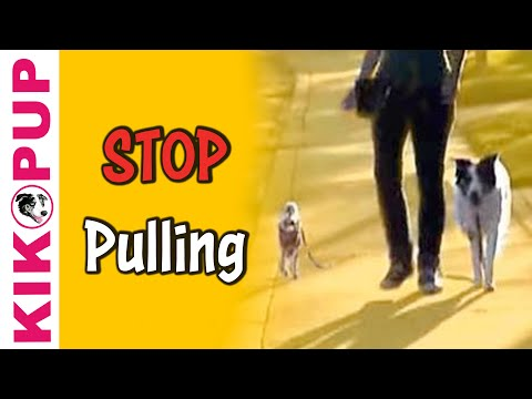 How to train your dog not to pull - Dog Training
