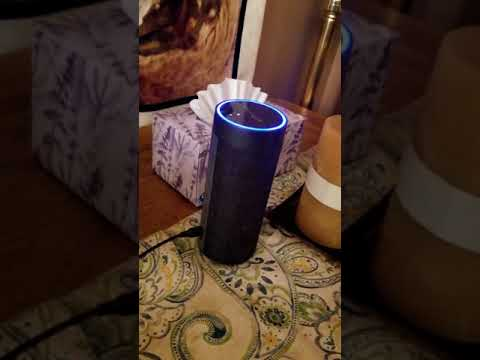 Husky pack sings with Amazon Alexa