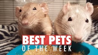 Best Pets of the Week | May 2018 Week 2