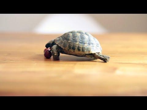Turtle Pee