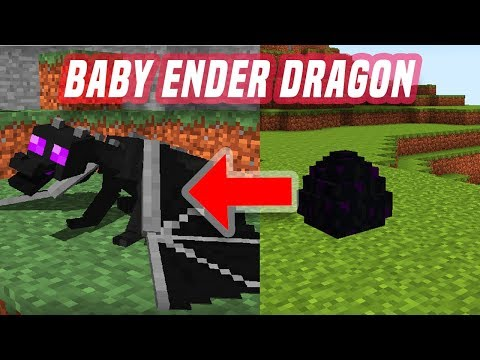 BABY DRAGON HATCHED FROM ENDER DRAGON EGG IN MINECRAFT POCKET EDITION USING ADDON
