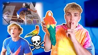 FAKE PARROT MAVERICK DEATH PRANK ON MY BROTHER
