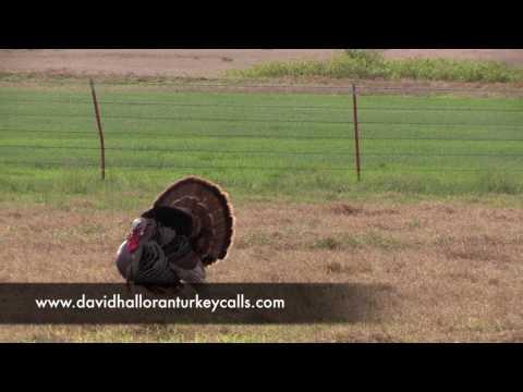 Oklahoma Spring Turkey Hunt