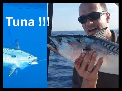 Fishing Adventures #87 - South Florida Bonito Fishing Trolling in Miami Beach