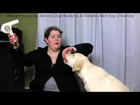Have a pet dog? Train it like a Service Dog!