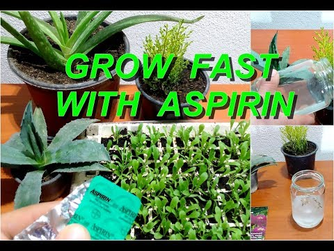 Use aspirin for faster growing all flowers and plants / faster germination