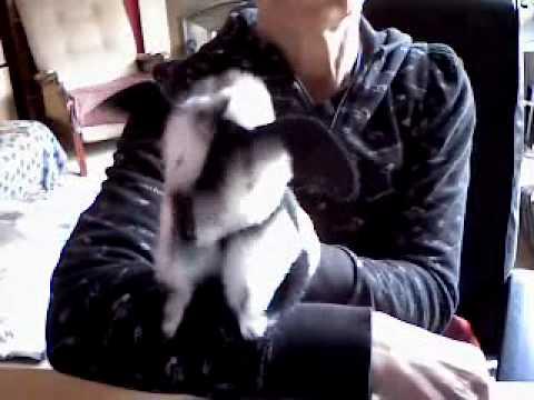 Greyhounds4me hand puppet