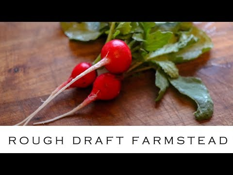 How to Use Radishes (and whether to cook them)