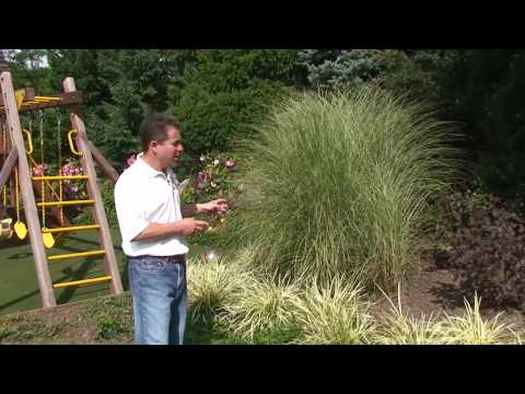 How To Choose Perennial Plants For Your Garden and Landscaping