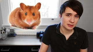 The Story of My Hamster
