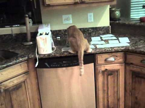 How to keep cats off the counter