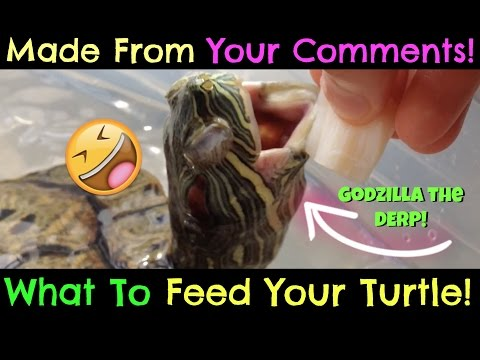 Turtle Adventures: What To Feed Your Turtle! (MADE FROM YOUR COMMENTS!)