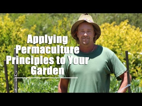 Applying Permaculture Principles to Your Garden
