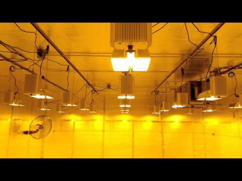 Growtech Systems - Commercial Grow Room - Gavita