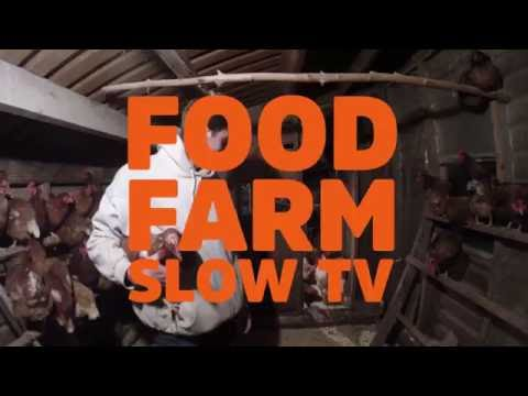 Chicken Moving - Food Farm Slow TV