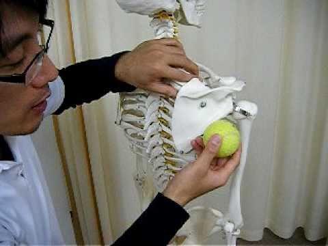 supraspinatus's self careⅢ[infraspinatus's relrease by tennis ball massage