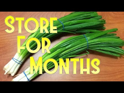 How to Store Spring Onion for Months