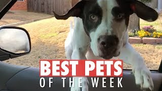 Best Pets of the Week Video Compilation   February 2018 Week 2