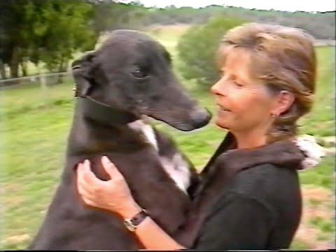 Greyhound Racing-1996 Beanstalker (The Big Dog)