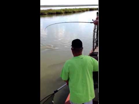 Redfish Action in Rockport Texas with fishing guide Jody Starr