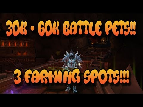 Wow Gold Guide: 30k - 60k Gold WoW Battle Pets!