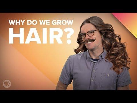 Why Do We Grow Hair Where We Do?