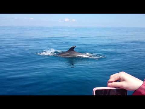Swimming with Dolphins in Portugal (Atlantic ocean)