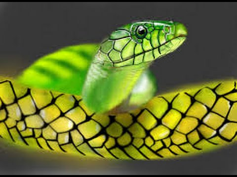 Snake as a Totem: Personality Characteristics and Life-Path Lessons