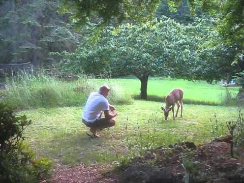Feeding Deer Banana Peels