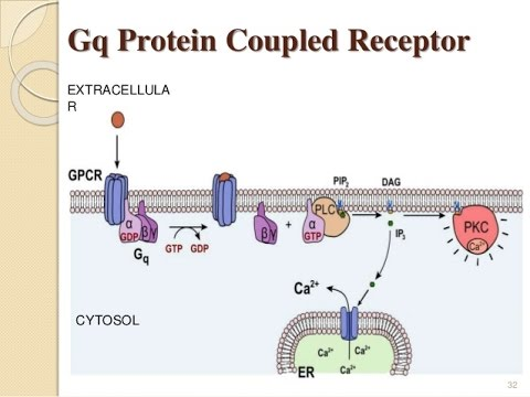 How to memorize receptors and G-protein linked second messengers - Gq, Gs, Gi, alpha, beta, D , H, V