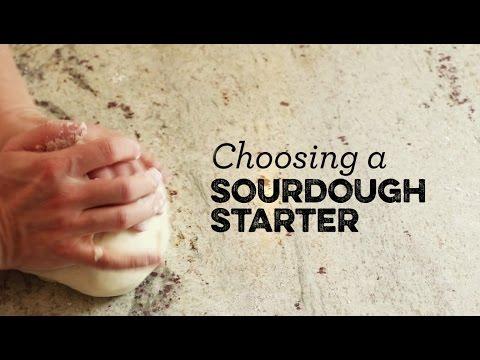 Choosing a Sourdough Starter