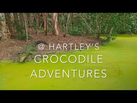 @ Hartley's crocodile adventures