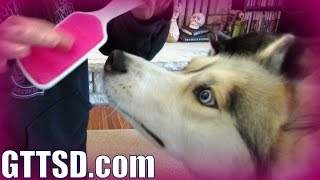 BRUSH YOUR DOGS TEETH | Orapup Review | Bye Bad Breath