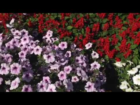 Flower gardens so beautiful in golden bc canada