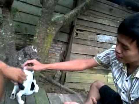 Xxx Mp4 BAGAN BATU PJR Kucing SeXXXX 3gp Sex