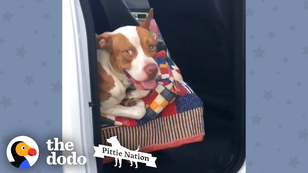 This Couple Found A Stray Pit Bull In Their Truck | The Dodo Pittie Nation