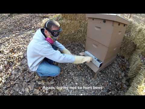 How I Use Oxalic Acid Vaporization to Treat Bees for Varroa Mites