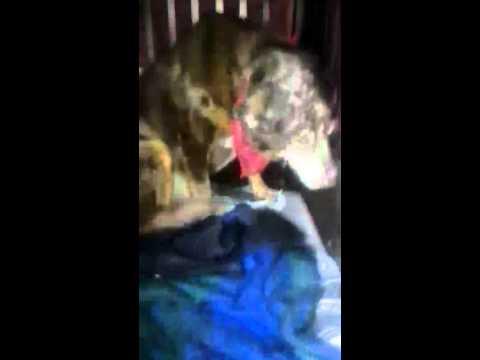 Dog gets caught eating rabbit poop