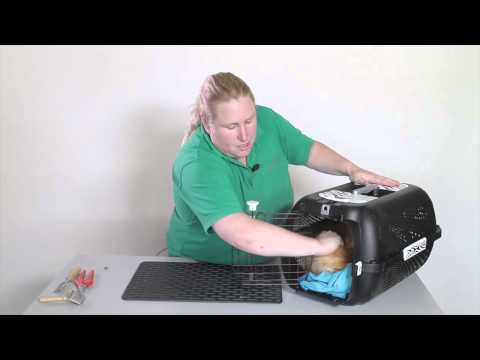 Behaviour, handling & transportation: Getting a cat out of a carrier