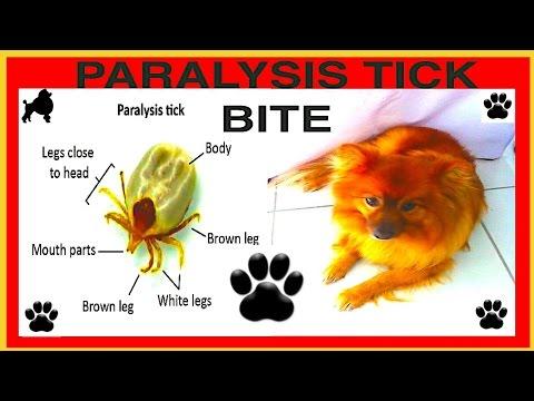 PARALYSIS TICK BITE DEADLY TICKS KILL DOGS DIY by Cooking For Dogs